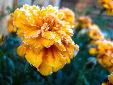 Garten Winterfest Machen Ab Wann by Balkonpflanzen Winterfest Machen Worauf Ist Zu Achten