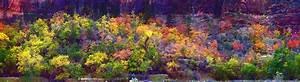 Zion Autumn : Solitude : JOHN MURK PHOTOGRAPHY