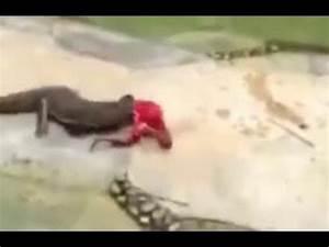 Alligator Bites Man's Head - YouTube