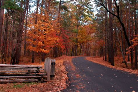 fall foliage   natchez trace parkway