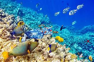 Coral Images Free Download Wallpaperwiki