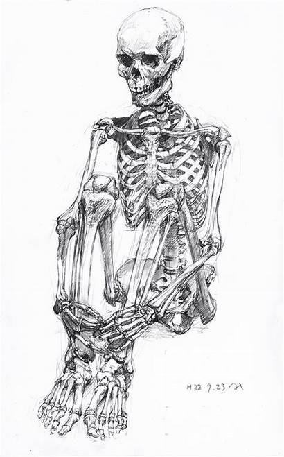 Skeleton Sitting Drawing Human Anatomy Sketch Skeletons