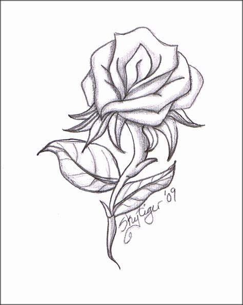 Hibiscus Flower Pencil Drawing at GetDrawings Free download