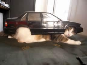cat car car cat cat pictures