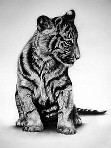 baby tiger by Zimbabwe22 on DeviantArt