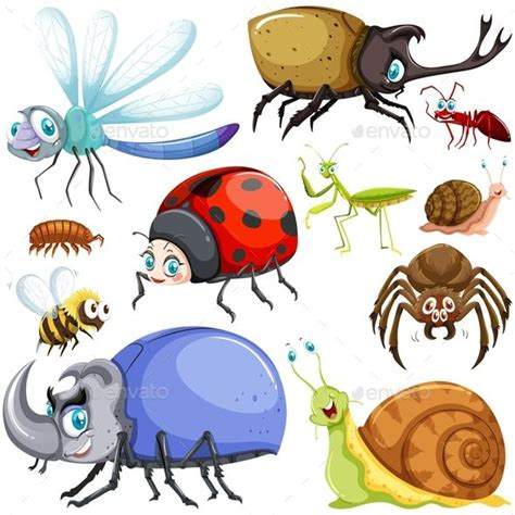 kinds  insects  images insects