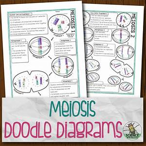 Meiosis Doodle Diagrams