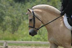 31 Best images about Kasper my fjord horse on Pinterest ...