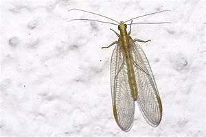 Fliegen Im Fensterrahmen : wie werde ich fliegen los winzige insekten in der wohnung wie hei en sie und wie werde ich sie ~ Buech-reservation.com Haus und Dekorationen