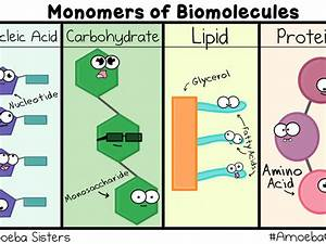 What Elements Make Up Carbohydrates Lipids Proteins And Nucleic Acids