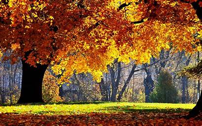 Scenery Autumn Wallpapers Backgrounds Fall Desktop Scenic