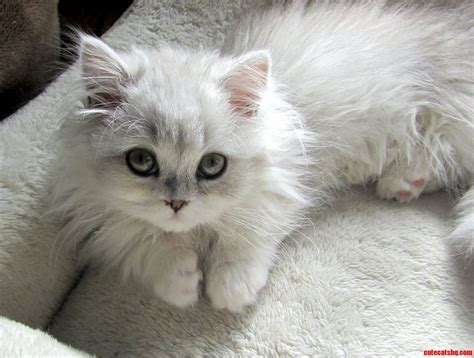 Pictures Of Cute Cats