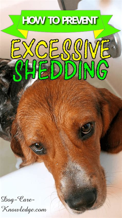 Heavy Shedding Dogs by Excessive Shedding How To Spot And Prevent It