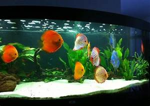 Fische Aquarium Hamburg : kompl diskus aquarium in bremen fische aquaristik ~ Lizthompson.info Haus und Dekorationen