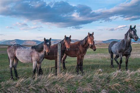 montana horses ranch horse