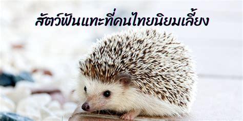 สัตว์ฟันแทะที่คนไทยนิยมเลี้ยง   TrueID In-Trend