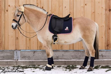 Die Besten 25+ Pferde Zu Verkaufen Ideen Auf Pinterest
