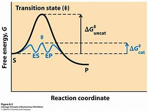 Reaction Coordinate Diagram Comparing Enzyme