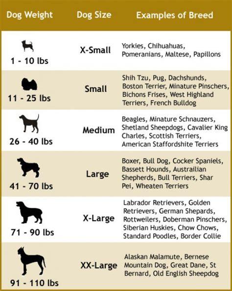 choosing   dog leash   dog size  type hubpages