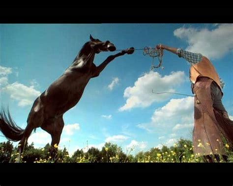animal planet horse ident  vimeo
