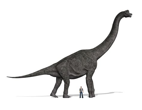 Brachiosaurus Facts About The Giraffe Like Dinosaur