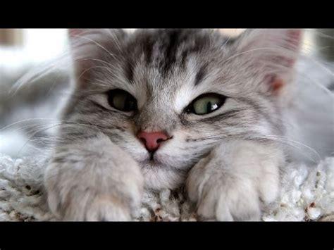 Search For Katz katzen treffen ihre besitzer nach langer zeit wieder