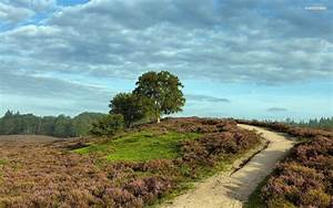 Heather Field Path Hills Trees Wallpapers