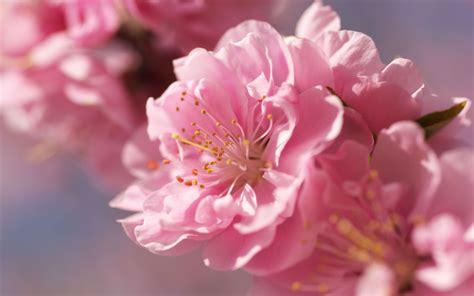 Fiore Flowers by Fiori Di Pesco Aly No Panic