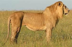 Mara Predator Project