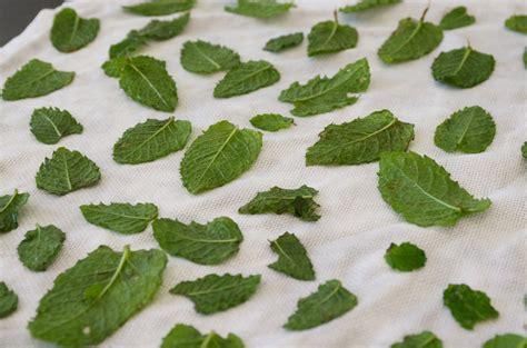 creer une cuisine conserver sécher congeler et utiliser la menthe récoltée