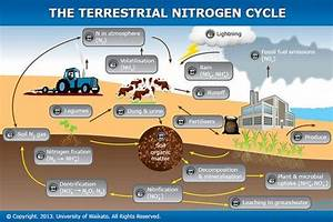 The Terrestrial Nitrogen Cycle