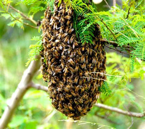 bee colony modern farming methods