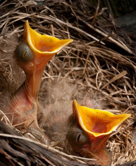 17 best images about wild bird articles from pet care
