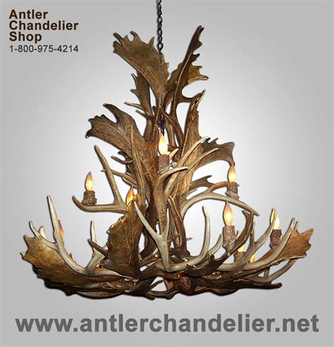 Antler Chandelier Shop by Real Antler Fallow Mule Deer Chandelier 16 20 Lights