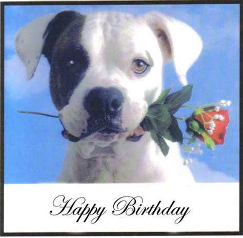 happy birthday dog facebook comments  graphics happy birthday dog facebook graphics happy