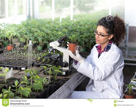 Biologist Holding Pot With Sprout Stock Photo - Image of ...