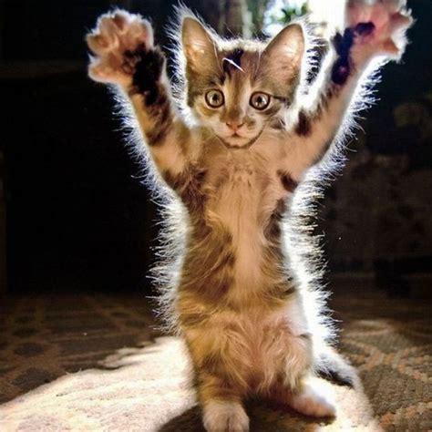 images de chats trop mignons