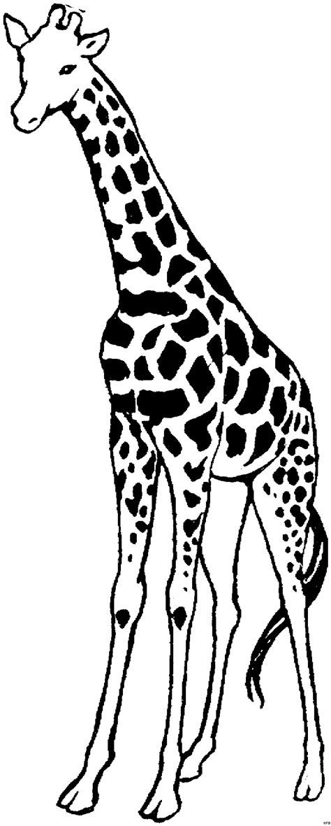 griaffe gross ausmalbild malvorlage tiere