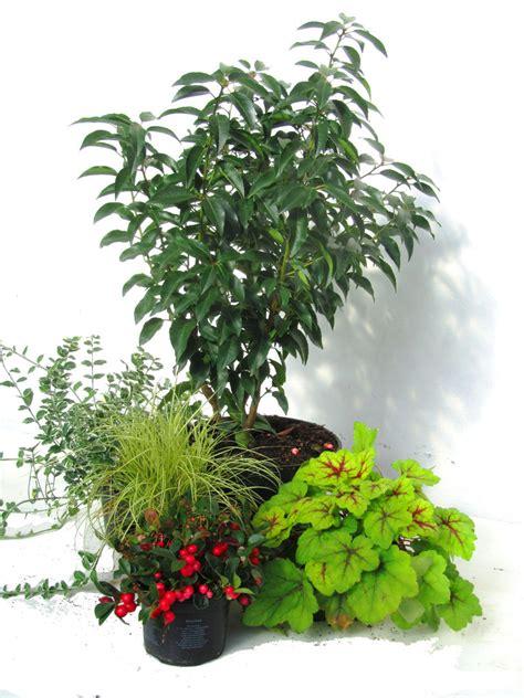 Winterharte Pflanzen Kübel by Winterhartes Pflanzen Set F 252 R K 252 Bel 37 50 Cm Pflanzen