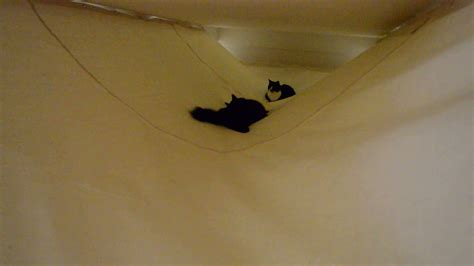 Hammock From Ceiling by Cat Ceiling Hammock