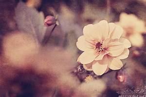 Little Me. | Vintage | Pinterest | Floral photography