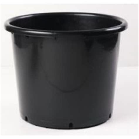 olivier en pot taille r 233 serve d eau astuce au