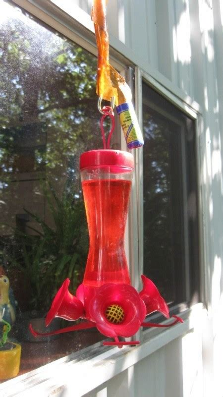 use flypaper for keeping ants out of hummingbird feeders