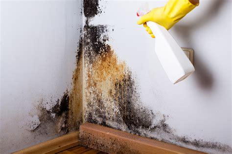 limpiar el moho de las paredes una solucion real