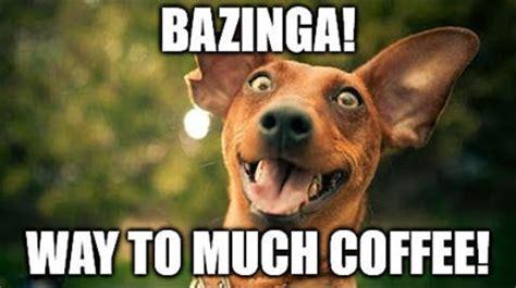 Too Much Coffee Meme - funny coffee dog memes