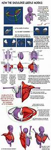 Agonist Antagonist Muscle Pairs Chart