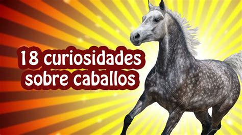 18 curiosidades sobre caballos - Sabías que... - YouTube