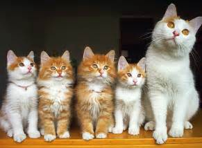 cat family cat family pictures worth pets world