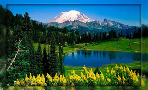 fondo pantalla paisaje bonito bosque dios fondo animado