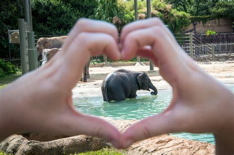 show tons  love   asian elephants  houston zoo